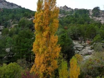 La Pedriza - Collado del Cabrón - Charca Verde - Viaje otoño, octubre_excursiones de senderismo:se